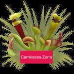 Carnivores.Zone